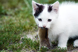 [256px-Mousehunter.jpg]