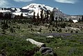 Mt Adams and Wildflowers, Gifford Pinchot National Forest (36985733446).jpg
