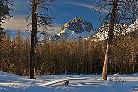 Pine beetle-killed trees in the SNRA below Mount Heyburn in winter