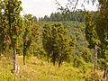 NSG Wacholdergelände bei Bleckhausen-11.08.12.JPG