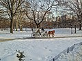 NYC Central Park Horse Carriage in the winter.jpg