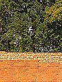 Nalanda - 039 Monastic Wall and Trees (9250741035).jpg