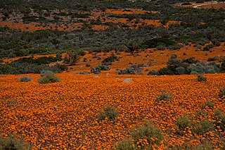 Namaqua National Park South African national park in Namaqualand in the Northern Cape