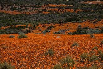 Namaqua National Park - Image: Namaqua NP4