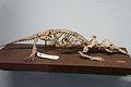 Natural History Museum, Dublin (6915990941).jpg