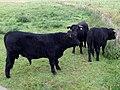 Naturdenkmal Bifurkation (Teilung von Hase und Else) Melle-Gesmold Datei 40.jpg