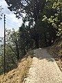 Nature's trail.jpg