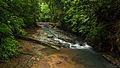 Nature in Costa Rica.jpg