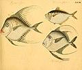 Naturgeschichte in Bildern mit erläuterndem Text (Taf. XXXVII) (6059209904).jpg