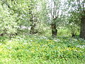 Naturschutzgebiet Heuckenlock 21.05.2014 Phase 25.JPG
