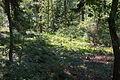 Naturschutzgebiet Trunnenmoor IMG 2674.jpg