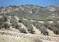 Near Jaén 05 (6846853562).jpg