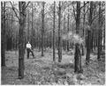 Newberry County, South Carolina. Erosion Control. (No detailed description given.) - NARA - 522720.tif