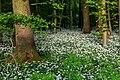 Nordkirchen, Naturschutzgebiet Ichterloh -- 2018 -- 2322.jpg