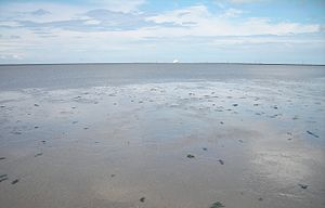 English: North Sea: low tide Deutsch: Nordsee:...