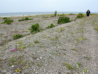 Beach ridge Wave-swept or wave-deposited ridge running parallel to a shoreline