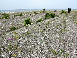 Beach ridge - Beach ridges on the north coast of Saaremaa, Estonia.