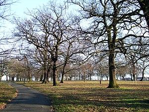 Norwood Park (London) - Trees of Norwood park