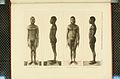 Nova Guinea - Vol 3 - Plate 44.jpg