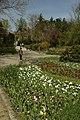 Novi Sad, Dunavski park, rozkvetlé květiny.jpg