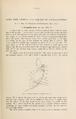 NovitatesZoologicae18 117.png