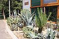 Nyíregyháza Zoo, succulents.jpg