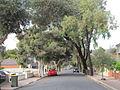 OIC croydon elizabeth street.jpg