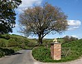 Oak, lane and horse's head - geograph.org.uk - 1296633.jpg