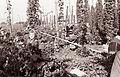 Obiranje hmelja v Savinjski dolini 1961 (7).jpg