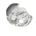 Occipital bone Basion03.png