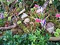 Ocean Park insect eating plants.jpg