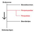 Onychophora.png
