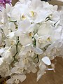 Orchid-11.jpg