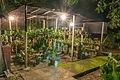 Orchid Nursery.jpg