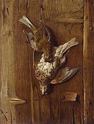 Trompe l'oeil with dead birds (thrush and fieldfare).