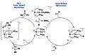Outer sphere MLC mechanism and inner sphere mechanism.jpg
