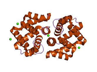 Fel d 1 - structural characterization of the tetrameric form of the major cat allergen fel d 1