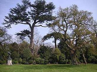 "Painshill - The ""amphitheatre"": an ancient Cork Oak and two Cedars form the setting for a shrubbery and a cast of a Renaissance statue after Giambologna"