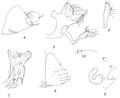 Parasite 20, 35 (2013) Figures 4-10.tif
