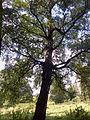 Park dworski Czachórskich (6).jpg