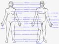 Partes exteriores del cuerpo humano.png