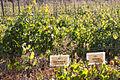 Paseo del Vino Winery (16363781304).jpg