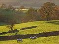 Pastures, Lorton - geograph.org.uk - 1041978.jpg
