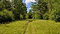 Path into the woods.jpg