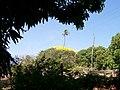 Pau D'arco Amarelo por traz do cajuzeiro - panoramio.jpg