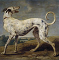 Paul de Vos - A white greyhound.jpg