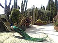 Peacock with Cactus plants at background.jpg
