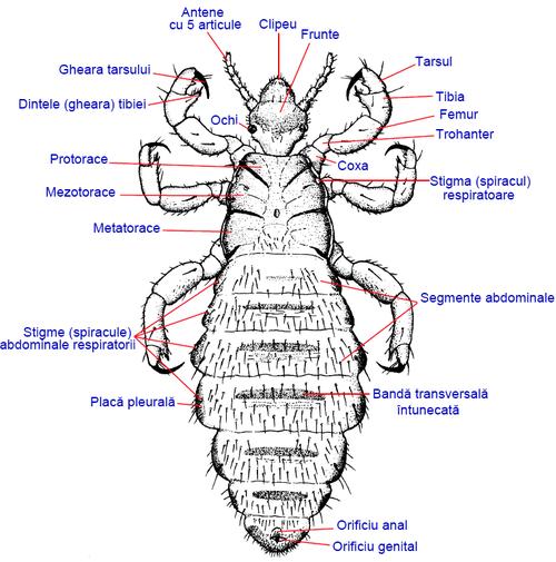 paraziții insectelor sunt exemple)