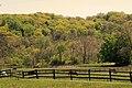 Pepper Pike Horses.jpg
