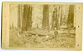 Photograph of Six Men Resting Near Fallen Trees - NARA - 7829558.jpg